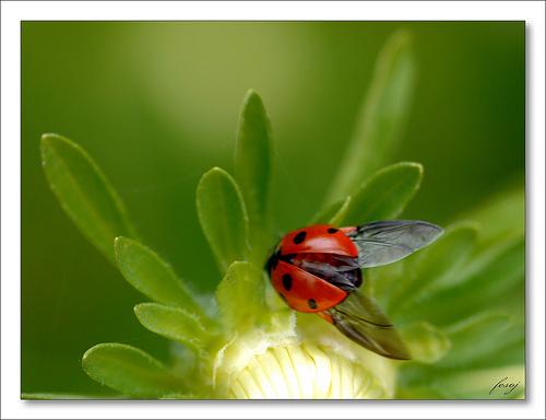 Day 4 – The Ladybug's Enchantment