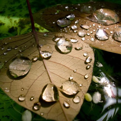 Day 14 – Crystal Drop Leaf Boats