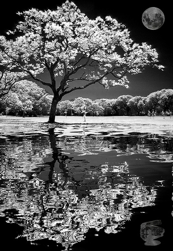 Day 21 – A Tree Grows in Brooklyn Pond
