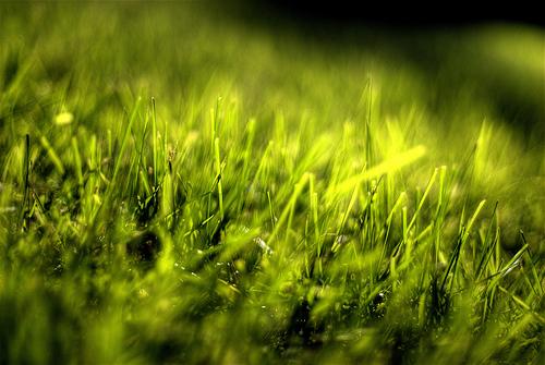 Day 32 – Green Blades