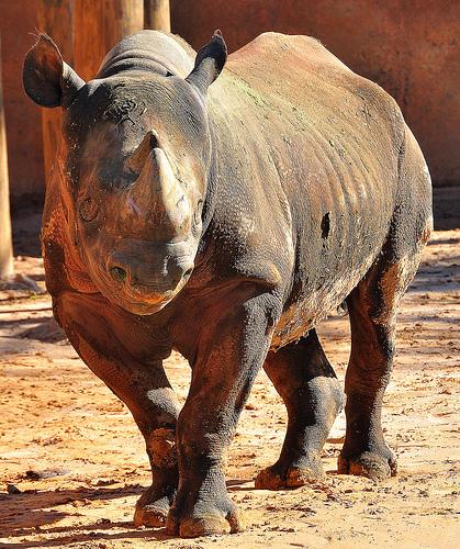Day 58 – A Rhino kinda Day!