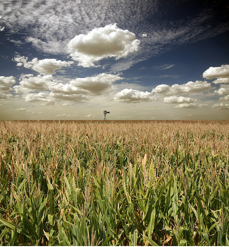 Day 60 – Who has Farmed the Wind?