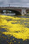 Day 082 – Yellow Flower Boats for the Goddess